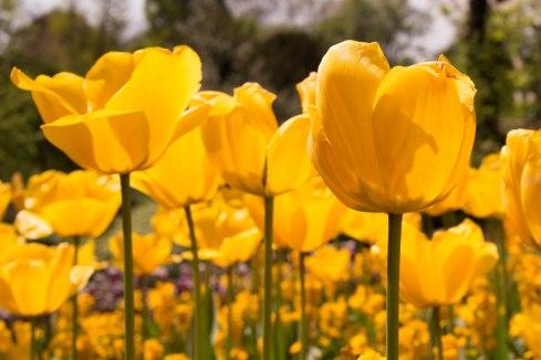 Richmond flowers-10