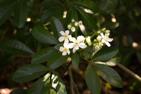 Richmond flowers-3