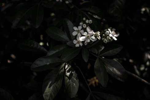 Richmond flowers-4