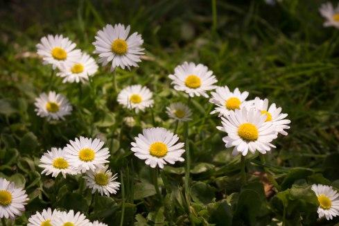 Richmond flowers-7
