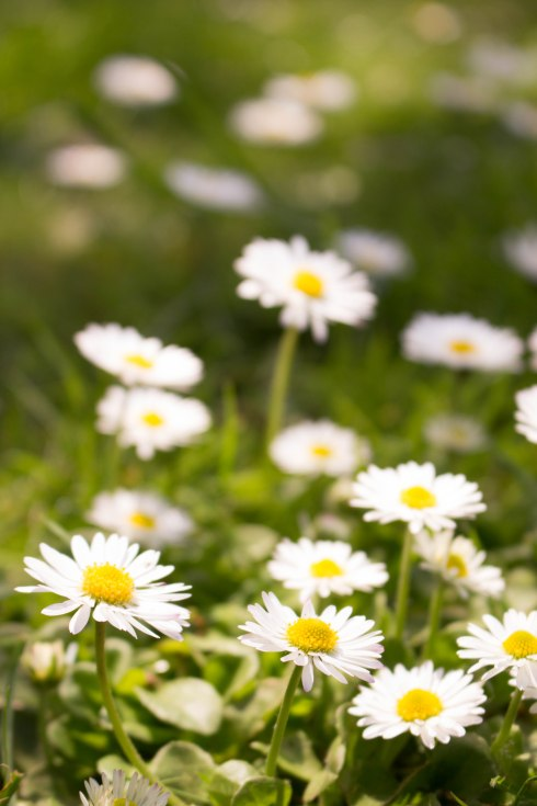 Richmond flowers-9